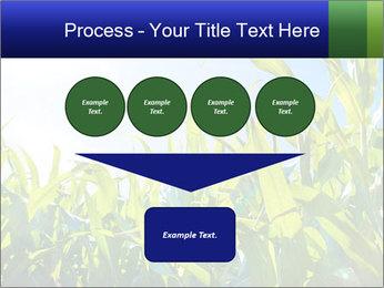 Green corn PowerPoint Template - Slide 93