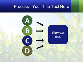 Green corn PowerPoint Template - Slide 94