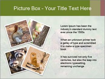 0000094649 PowerPoint Templates - Slide 23