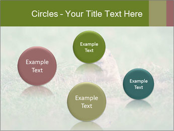 0000094649 PowerPoint Templates - Slide 77
