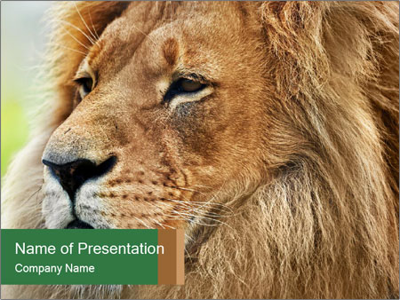 Lion savanna PowerPoint Templates
