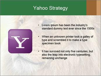 Lion savanna PowerPoint Templates - Slide 11