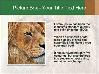 Lion savanna PowerPoint Templates - Slide 13
