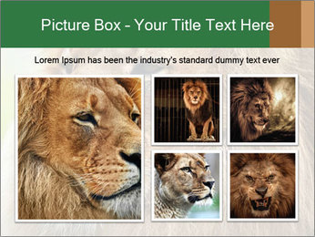Lion savanna PowerPoint Templates - Slide 19