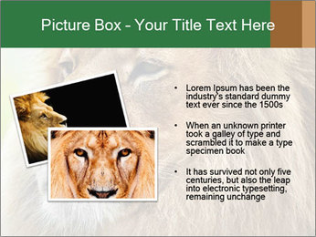 Lion savanna PowerPoint Templates - Slide 20
