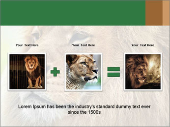 Lion savanna PowerPoint Templates - Slide 22