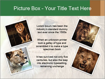 Lion savanna PowerPoint Templates - Slide 24
