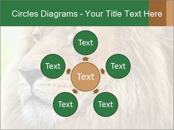 Lion savanna PowerPoint Templates - Slide 78