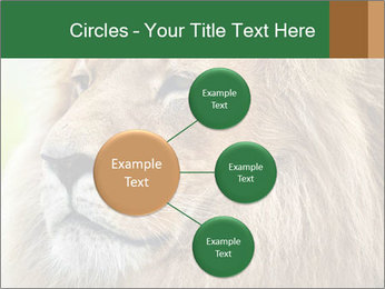 Lion savanna PowerPoint Templates - Slide 79
