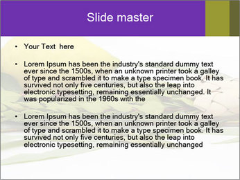 Etrog PowerPoint Template - Slide 2