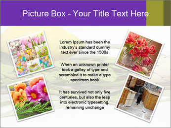Etrog PowerPoint Template - Slide 24