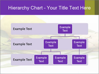 Etrog PowerPoint Template - Slide 67