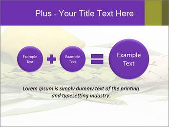 Etrog PowerPoint Template - Slide 75