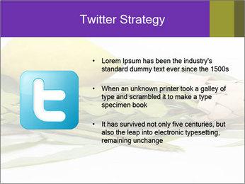 Etrog PowerPoint Template - Slide 9