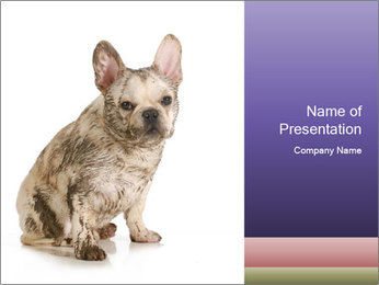 Dirty dog PowerPoint Template - Slide 1