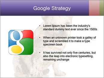 Dirty dog PowerPoint Template - Slide 10