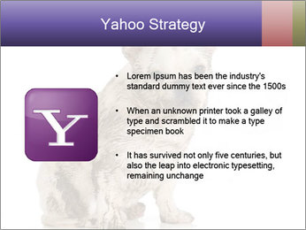 Dirty dog PowerPoint Template - Slide 11
