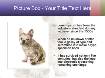 Dirty dog PowerPoint Template - Slide 13