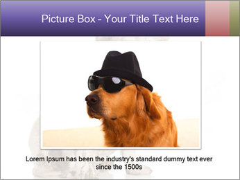 Dirty dog PowerPoint Template - Slide 15