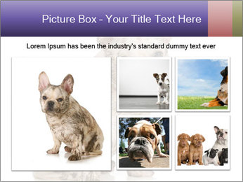 Dirty dog PowerPoint Template - Slide 19