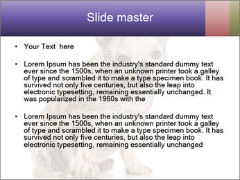 Dirty dog PowerPoint Template - Slide 2