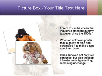 Dirty dog PowerPoint Template - Slide 20