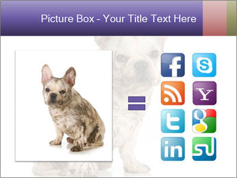 Dirty dog PowerPoint Template - Slide 21