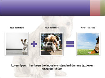 Dirty dog PowerPoint Template - Slide 22