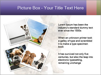 Dirty dog PowerPoint Template - Slide 23