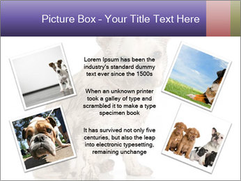Dirty dog PowerPoint Template - Slide 24
