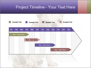 Dirty dog PowerPoint Template - Slide 25