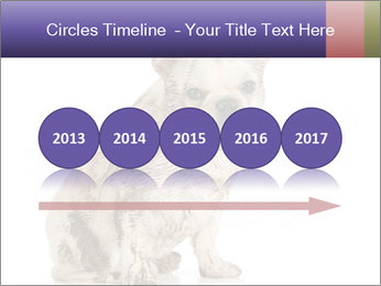Dirty dog PowerPoint Template - Slide 29