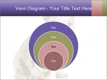 Dirty dog PowerPoint Template - Slide 34