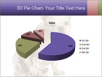 Dirty dog PowerPoint Template - Slide 35