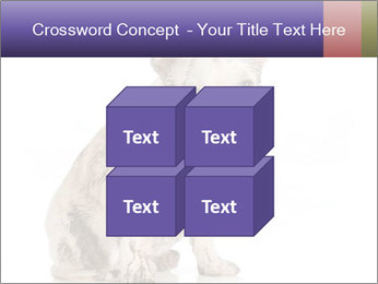 Dirty dog PowerPoint Template - Slide 39