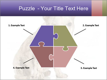 Dirty dog PowerPoint Template - Slide 40