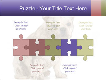Dirty dog PowerPoint Template - Slide 41