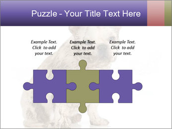 Dirty dog PowerPoint Template - Slide 42
