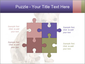 Dirty dog PowerPoint Template - Slide 43