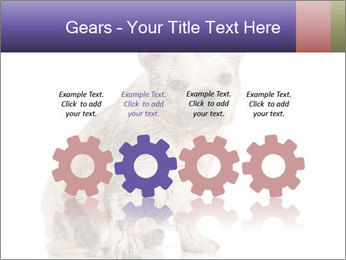 Dirty dog PowerPoint Template - Slide 48
