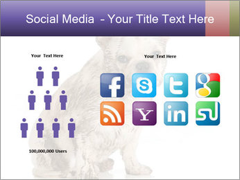Dirty dog PowerPoint Template - Slide 5