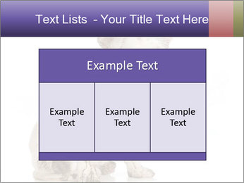 Dirty dog PowerPoint Template - Slide 59