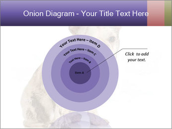 Dirty dog PowerPoint Template - Slide 61