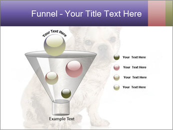Dirty dog PowerPoint Template - Slide 63