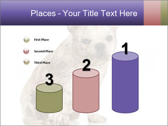 Dirty dog PowerPoint Template - Slide 65