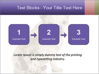 Dirty dog PowerPoint Template - Slide 71