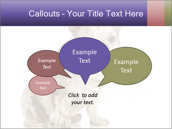 Dirty dog PowerPoint Template - Slide 73