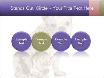 Dirty dog PowerPoint Template - Slide 76