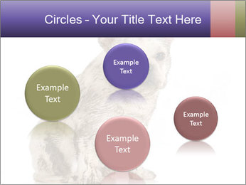 Dirty dog PowerPoint Template - Slide 77