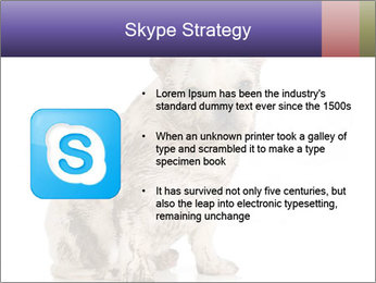 Dirty dog PowerPoint Template - Slide 8
